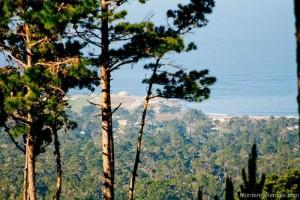 Ocean Pines #50